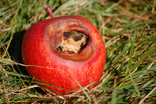 This photo shows a rotten apple sitting on grass.
